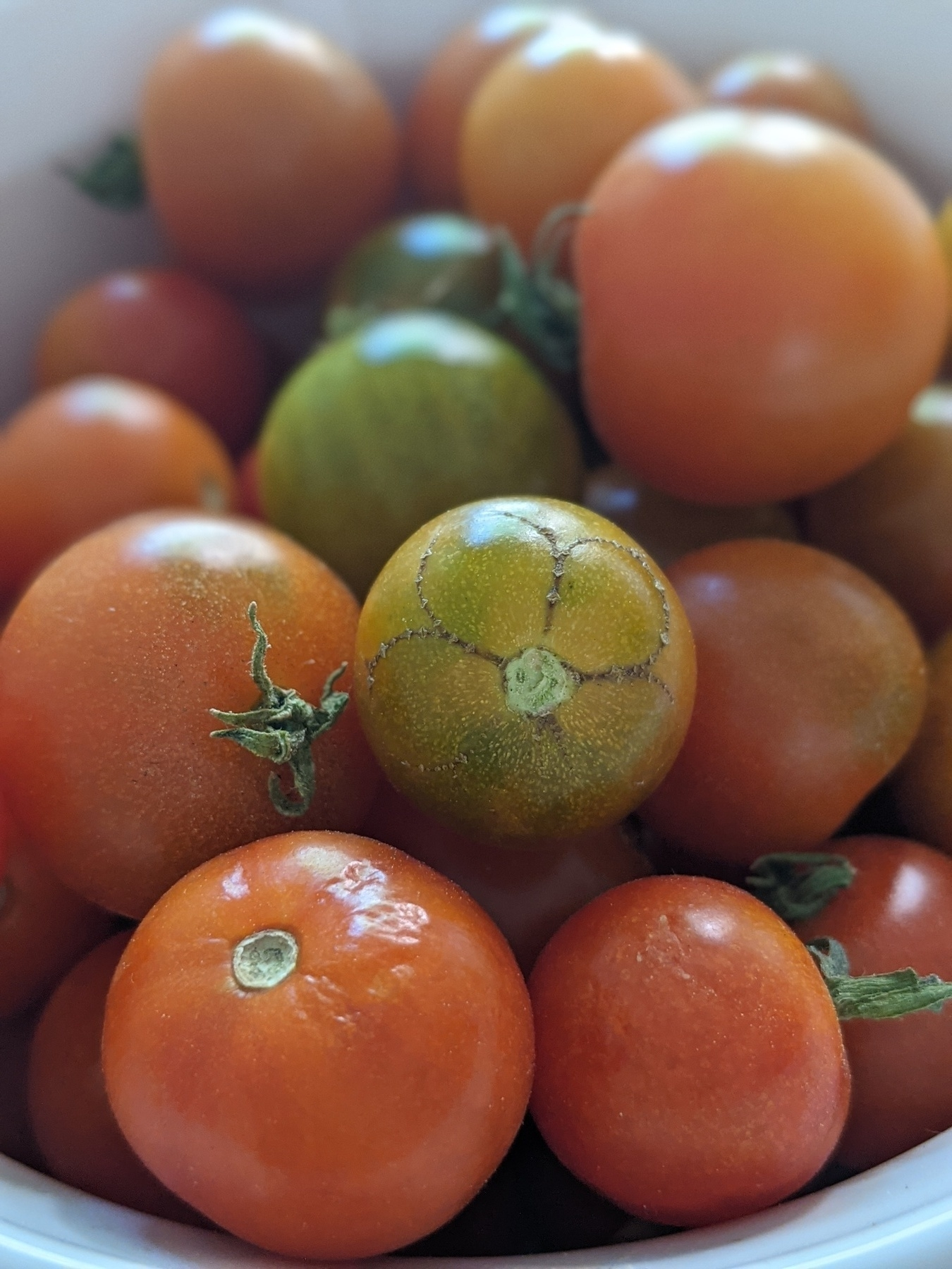 Small white bowl filled with cherry tomatoes. One tomato near the center has brown lines on it in that create the shape of big round flower petals.