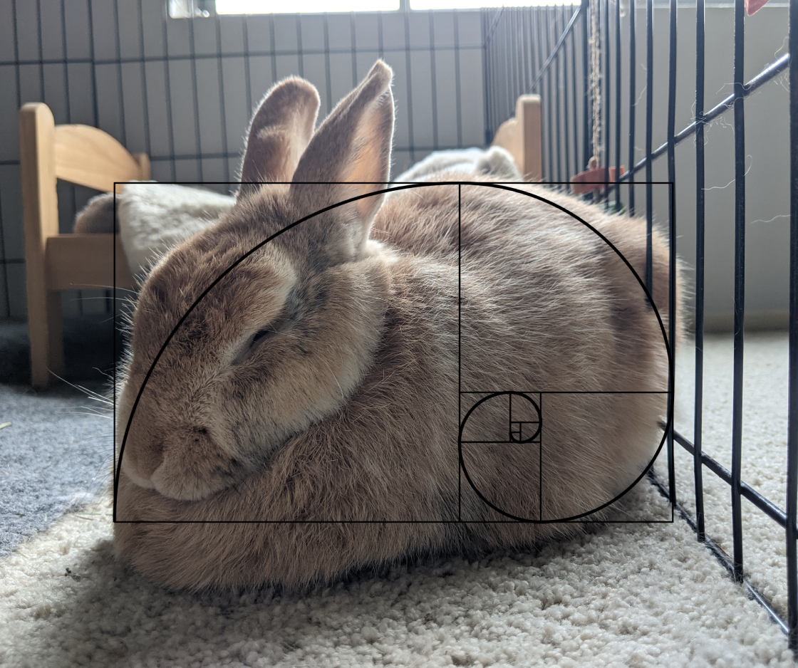 An orange rabbit sits in a loaf position. There is an image of the golden ratio overlaid to line up with the curves of the rabbit's body.